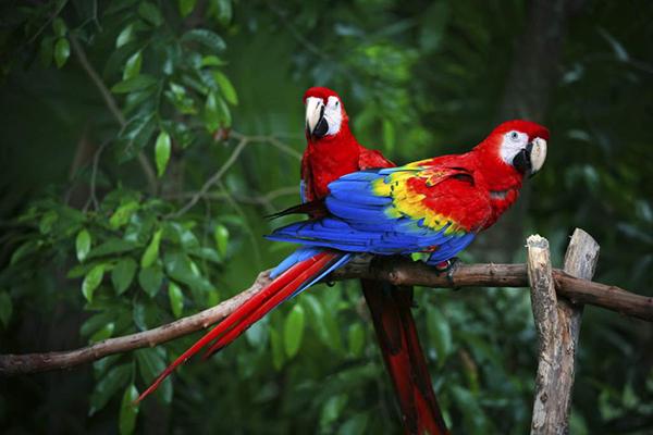 carousel-macawmountain