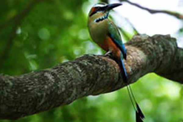 carousel-ecofincasansilvestre