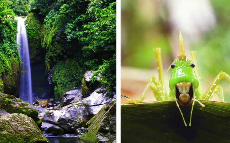 carousel-picobonito-naturaleza