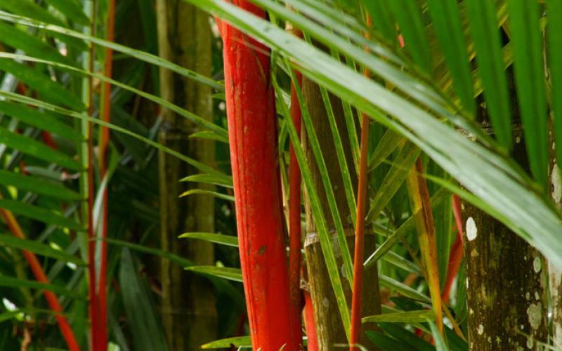 carousel-jardinbotanicolancetilla