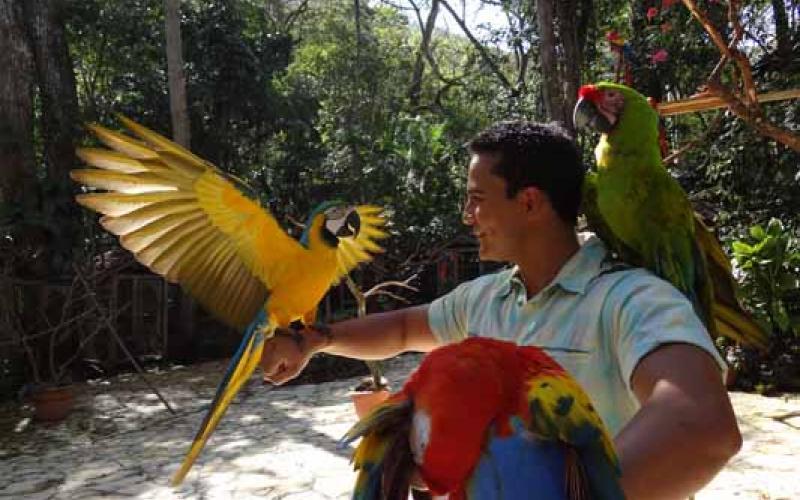 carousel-parqueavesmontanaguacamaya