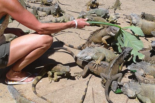 carousel-arch-iguana-and-marine-park