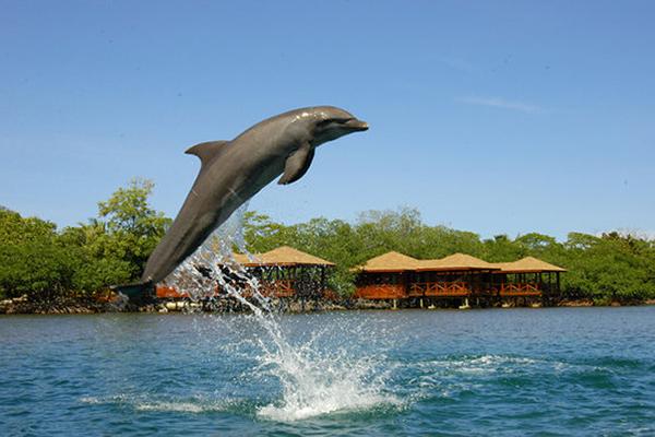 carousel-encuentro-con-delfines