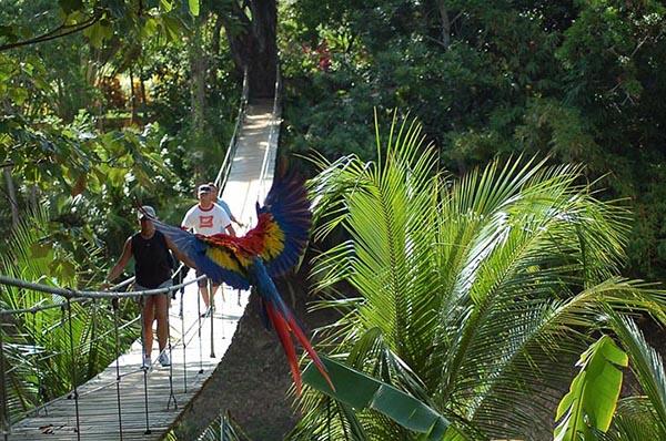 carousel-gumbalimba-park